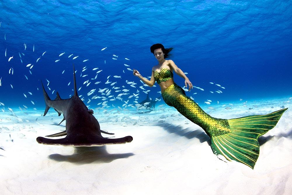 Unterwassermodel Katrin Gray schwimmt mit Haien