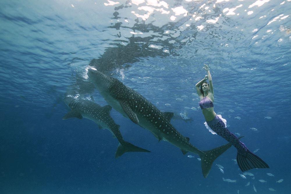 Unterwassermodel schwimmt mit Walhaien