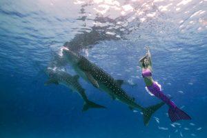 Unterwasershootings auf den Malediven - eine unvergessliche Meerjungfrauen-Reise